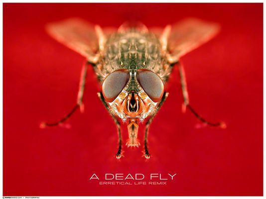 a dead fly (erraticalLIFE rmx)