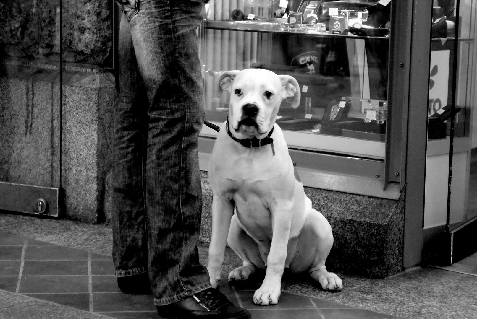 A dog`s life