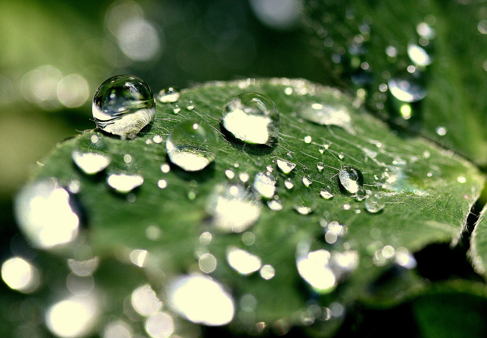 a drop of autumn