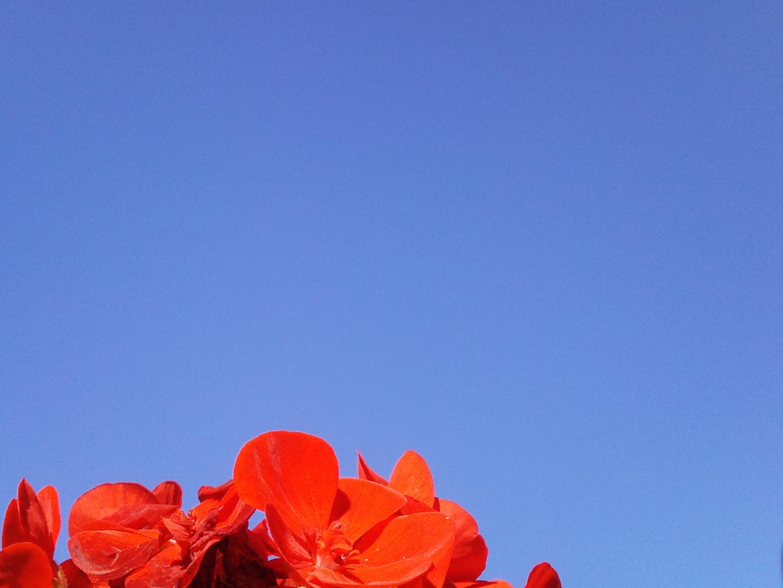 A Fleur de Ciel