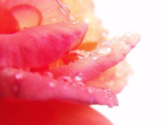 A Fleur de p'Eau