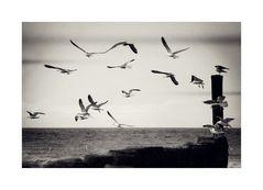 * a flock of seagulls *