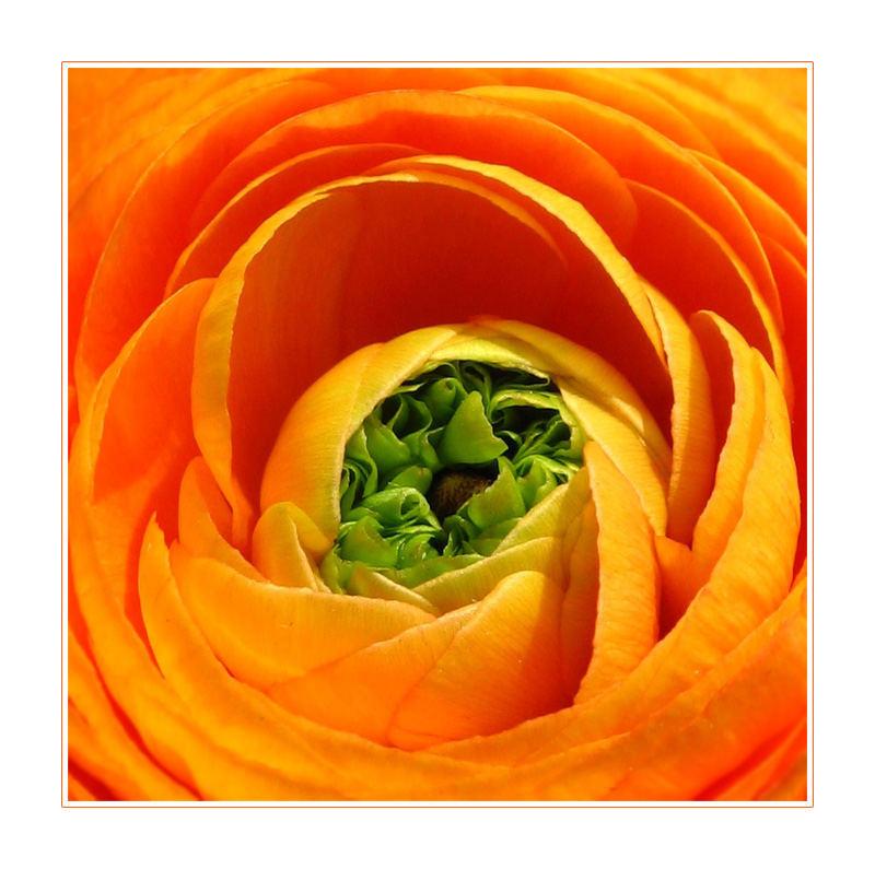 a flower spirit