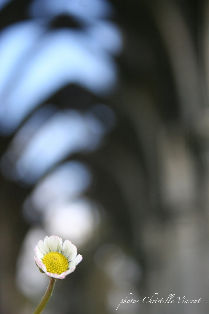 A flower to decorate the Cathedrale...
