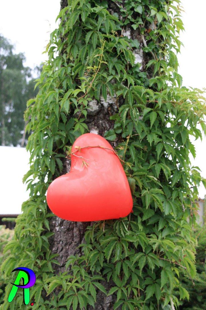 A Heart of Tree