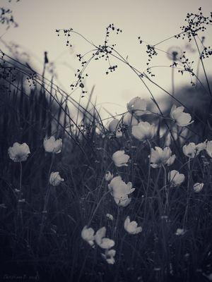 a heaven in a wild flower