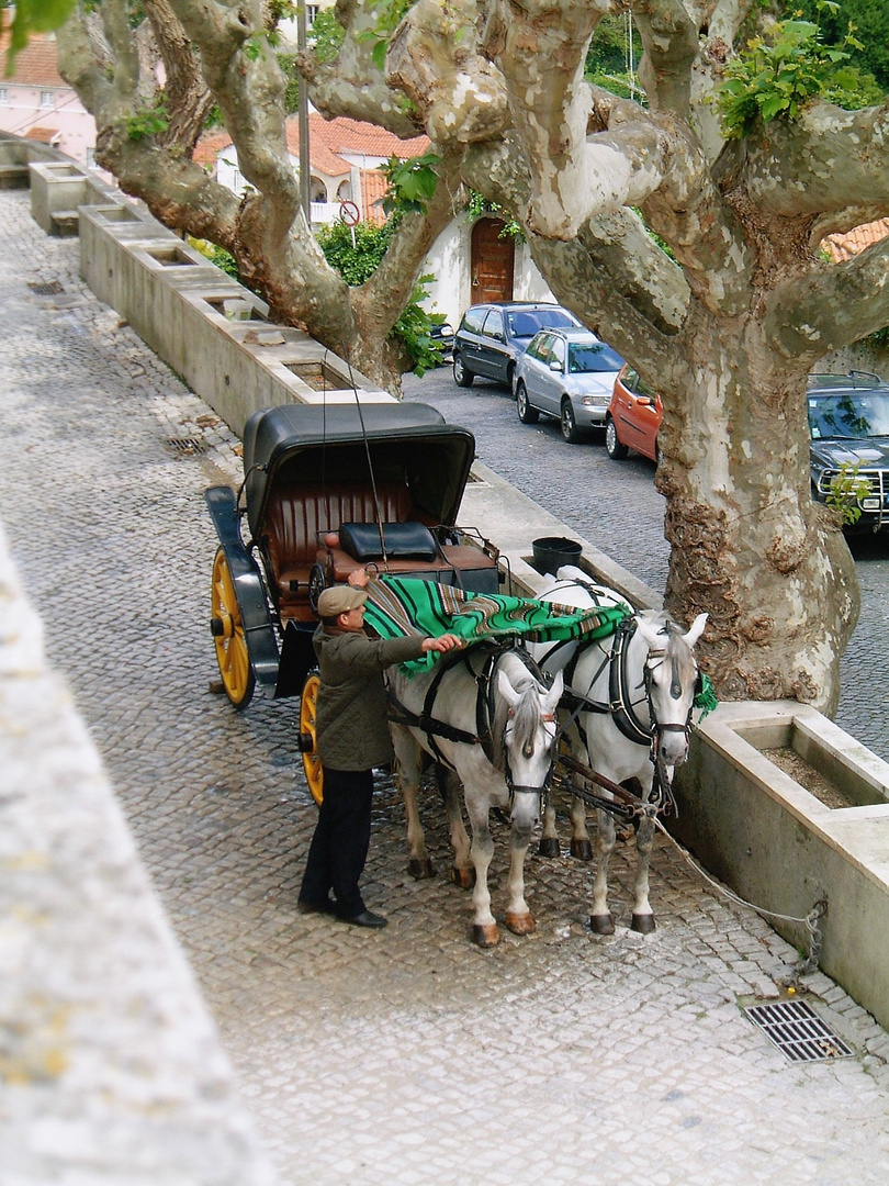A Horse Buggy near the Kings Palace, Sintra