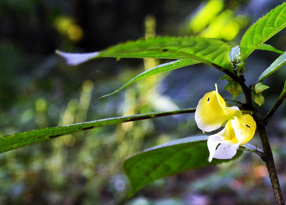 A JUNGLE FLOWER
