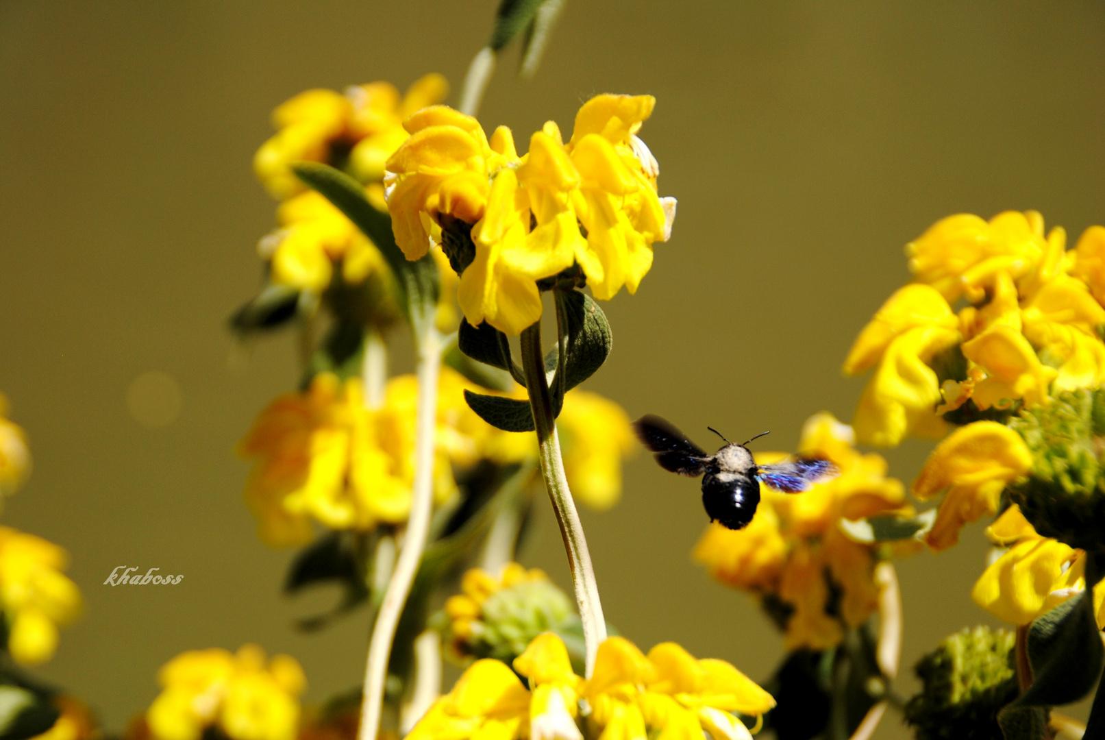 A la conquête du pollen