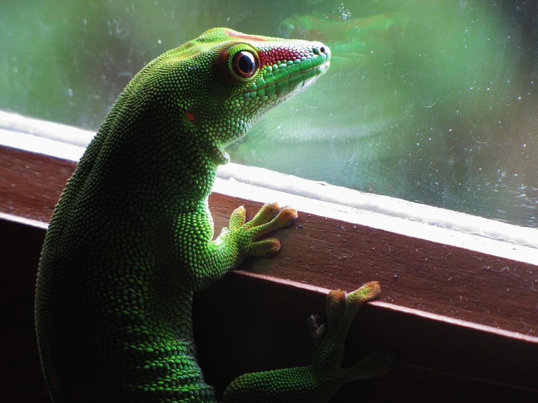 à la fenêtre...