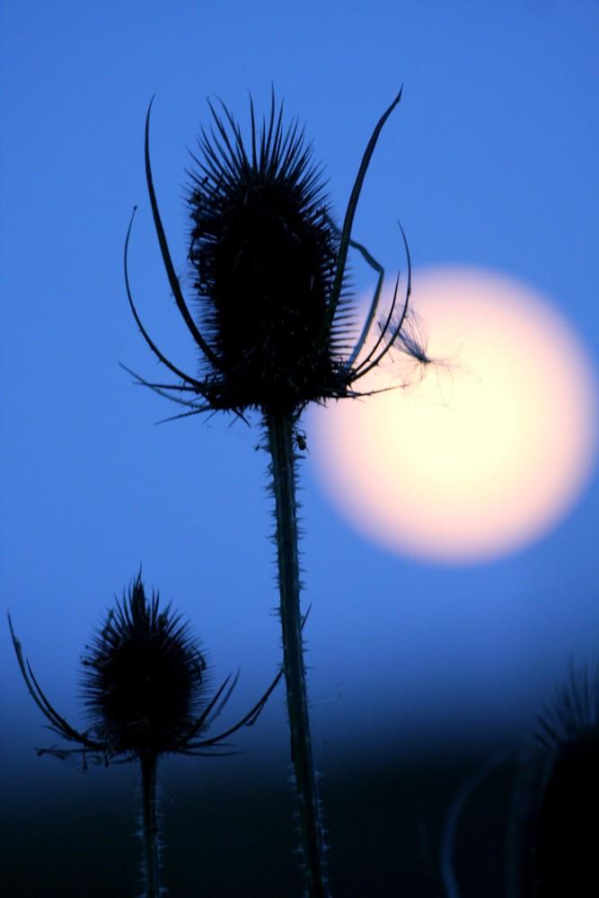 a la lueur de la lune