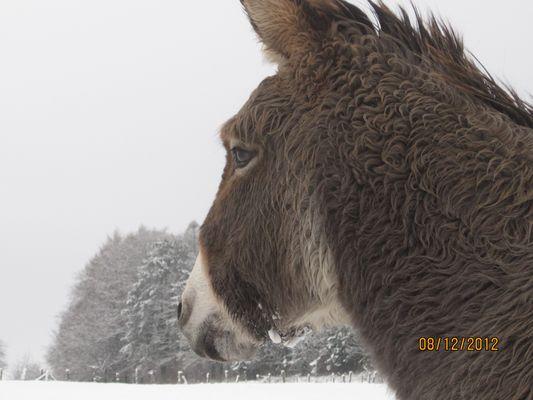 à la lueur de la neige