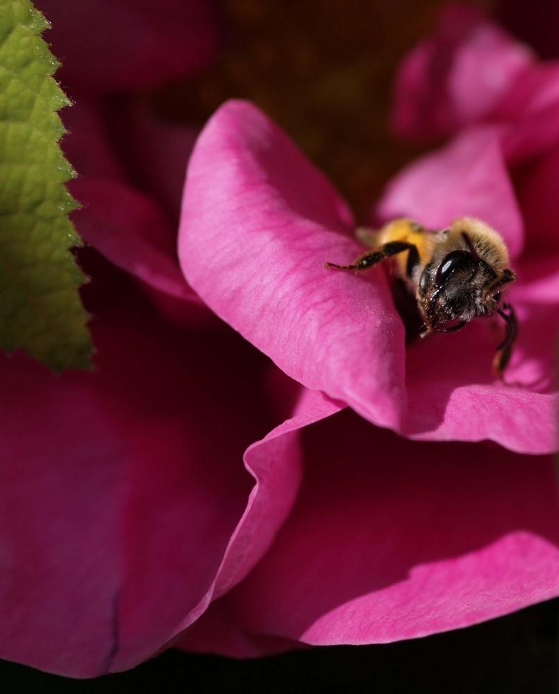 A la recherche de pollen