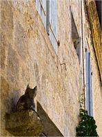 A la Romieu les chats sont partout