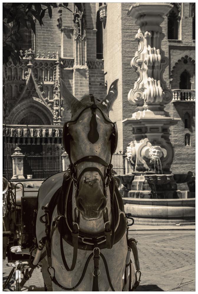 A la sombra de la Giralda (Sevilla Andalucia España)