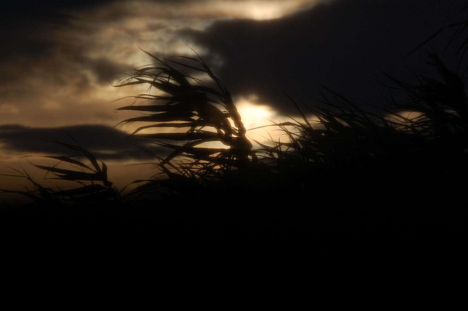 A la Tombée de la Nuit à la campagne
