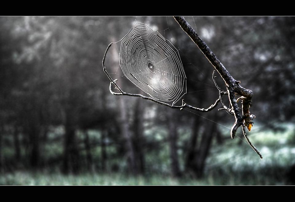à l'abri de la forêt