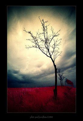... a landscape ...