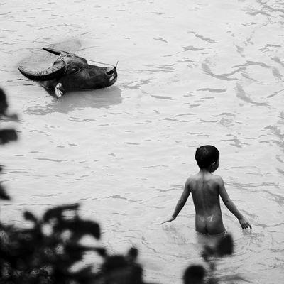 à l'heure de la baignade... (Région de Sapa, Nord Vietnam)