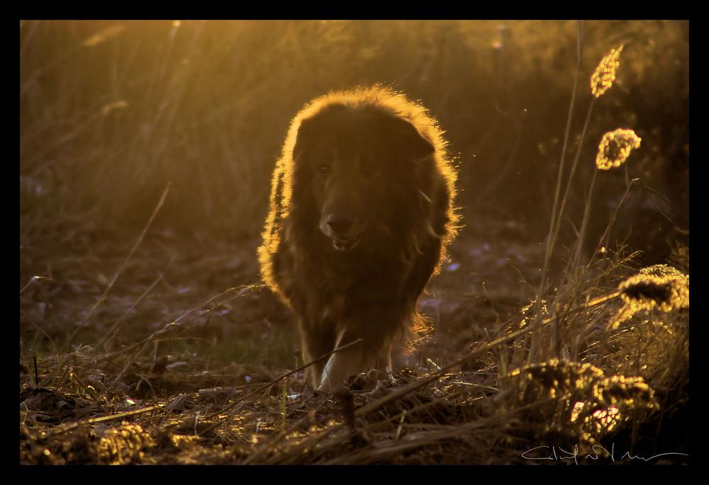 a lion inside