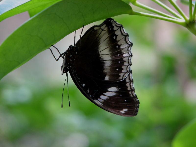A little butterfly...