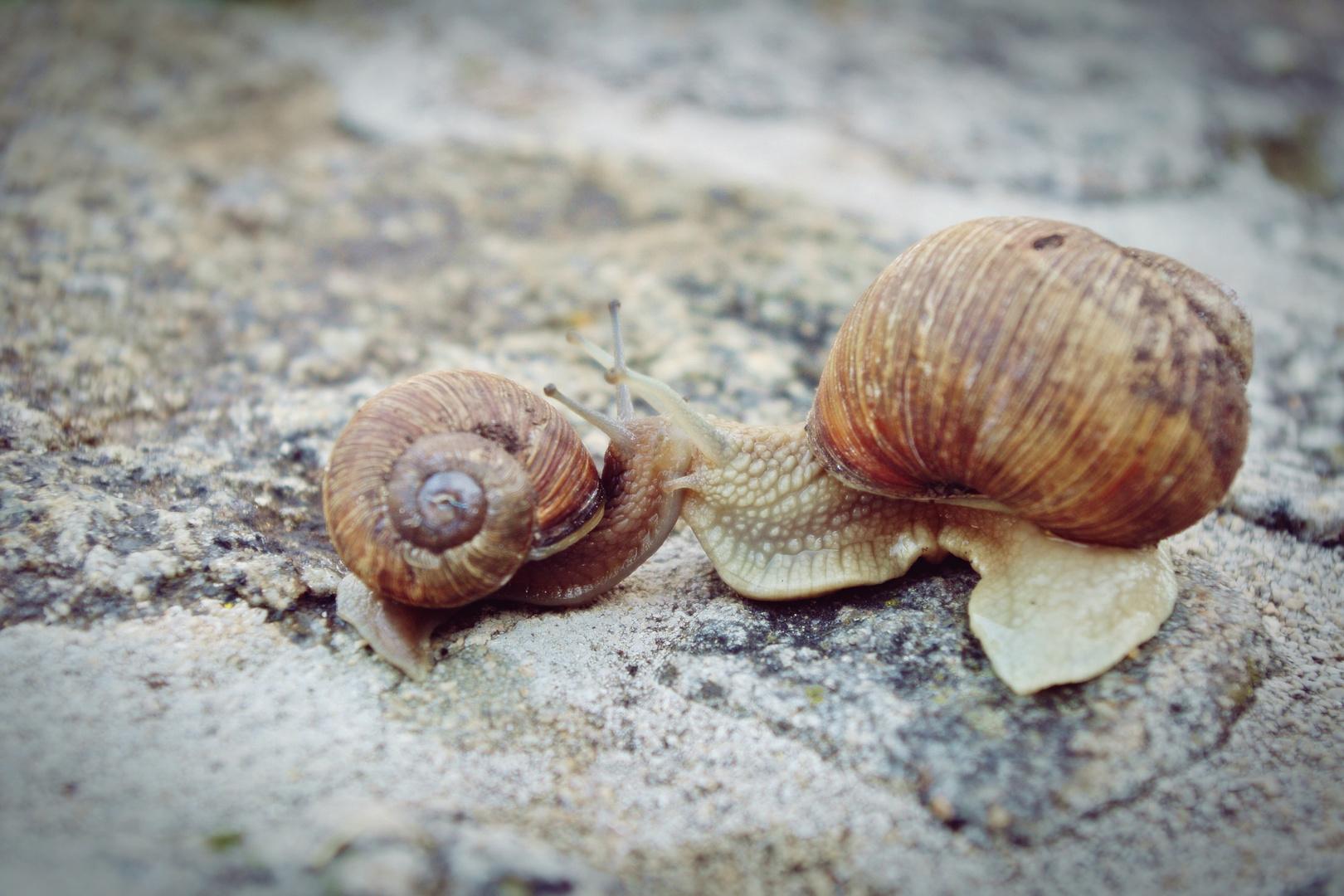 ..a little love story