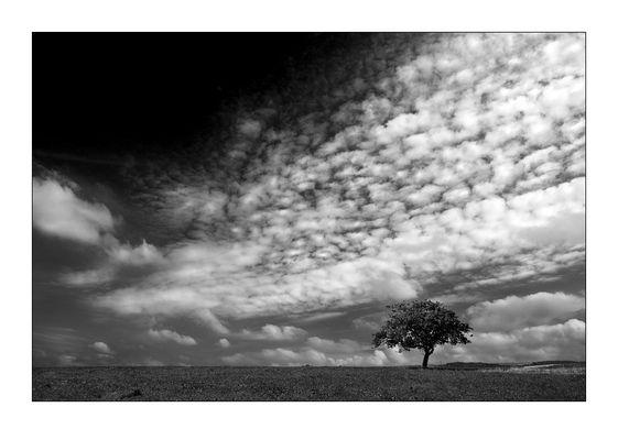 --- a little tree ---