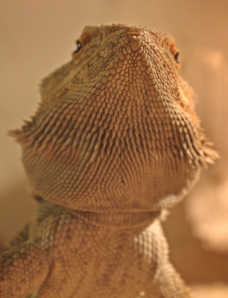 "A lizard named ""Lucky"" - 2"
