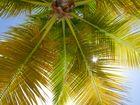 A l'ombre d'un palmier
