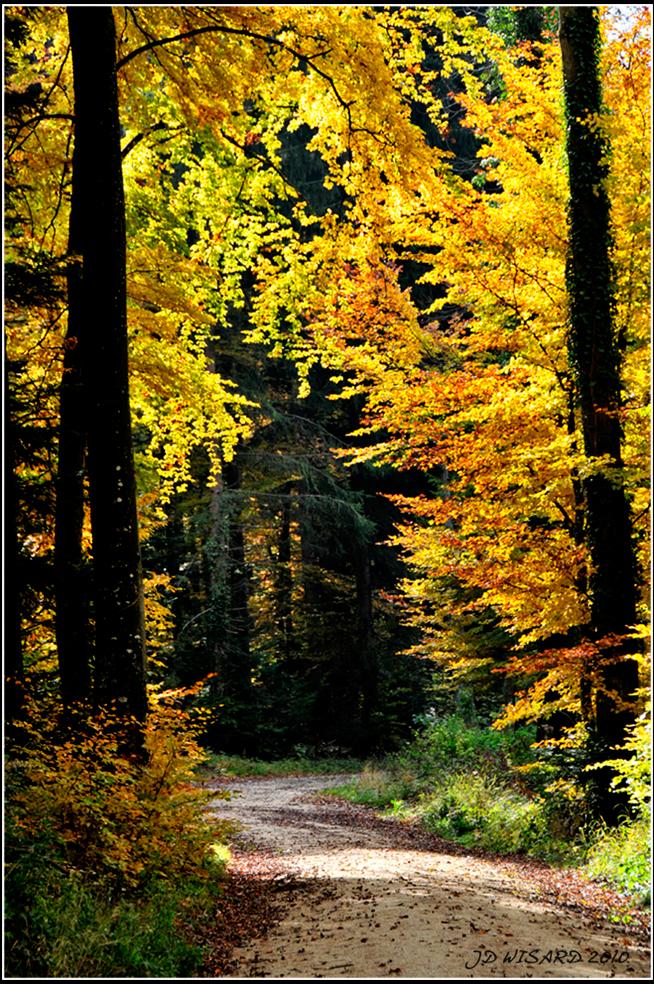 ....A l'Or ée de la forêt....