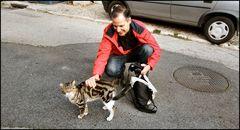 A lovely street cat