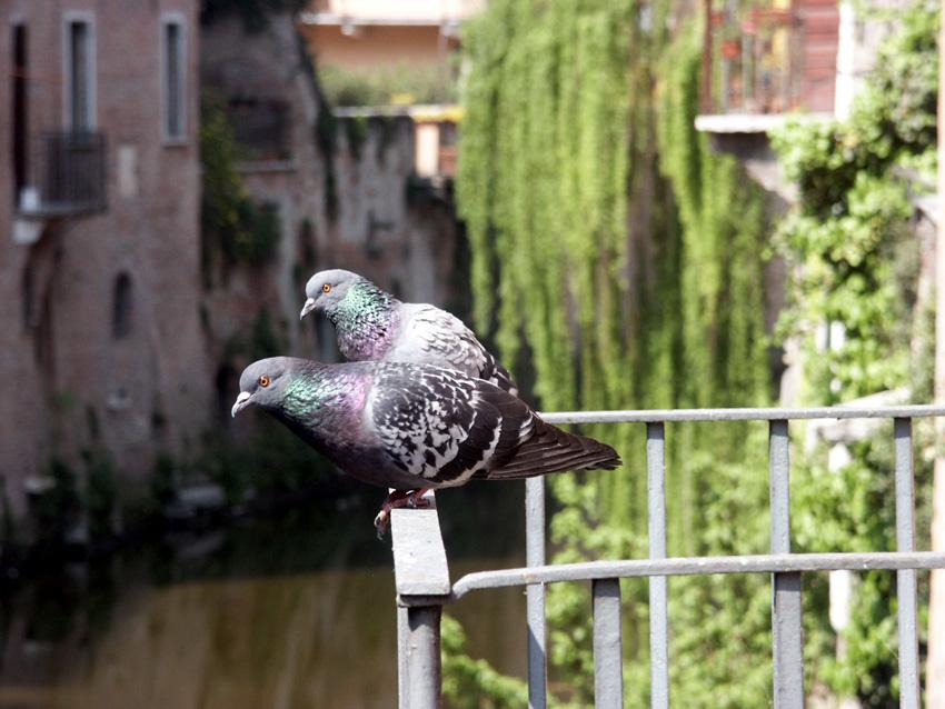 a Mantova...