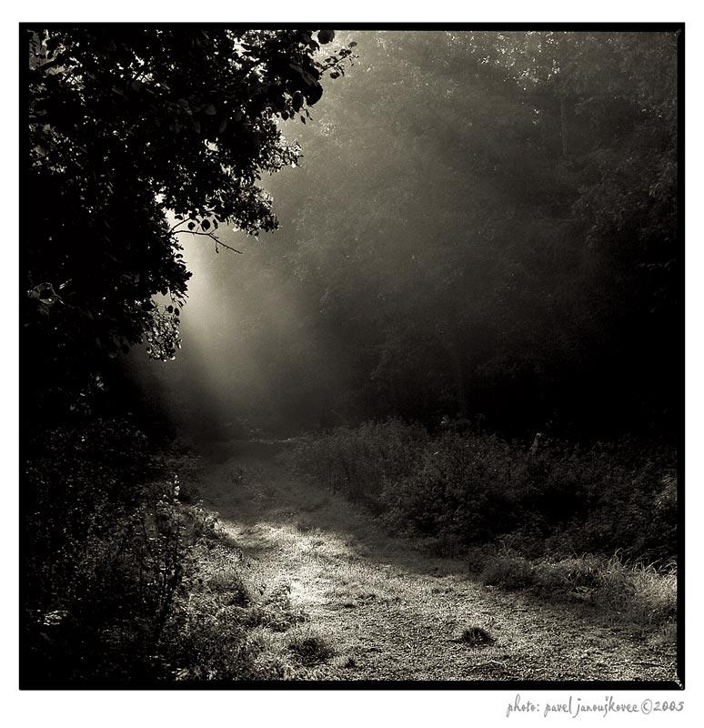 ... a misty morning II. ...