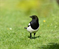 A most royal Bird...