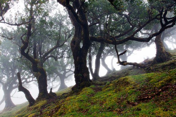 A mystical place..