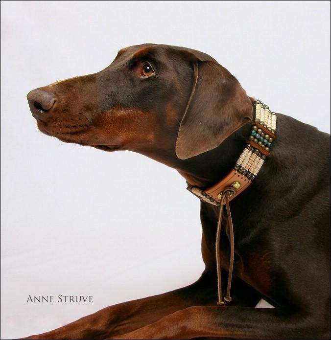 A new collar