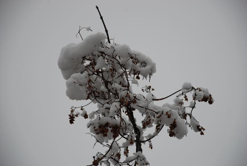 A nice winter coat