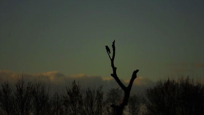 a Novembre il corvo