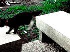a passo di gatto!