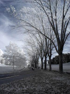 A path in Villa Doria Pamphilj - Rome in Infrared