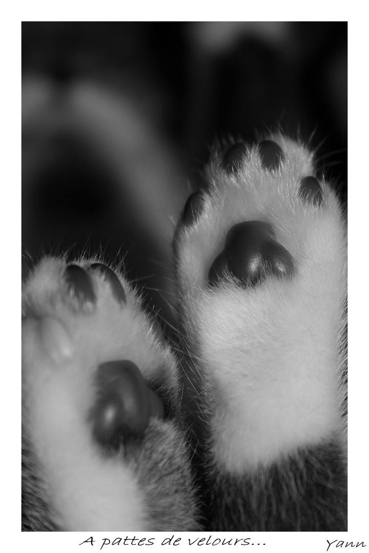 A pattes de velours....