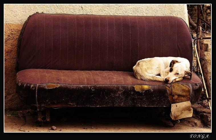 a perfect nap...