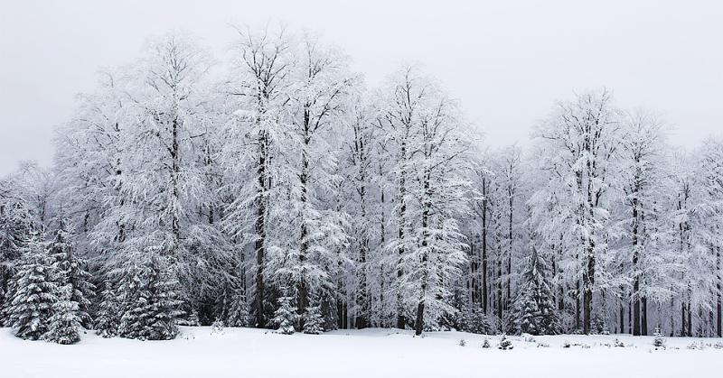 A Piece Of Winter