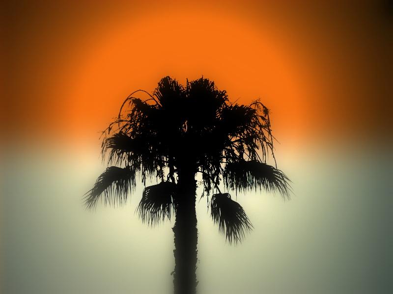 A Pine Tree Head