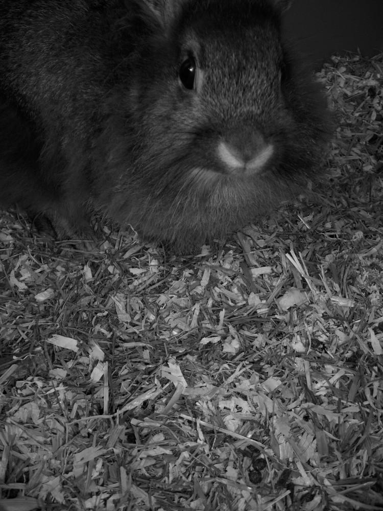 a rabbit...