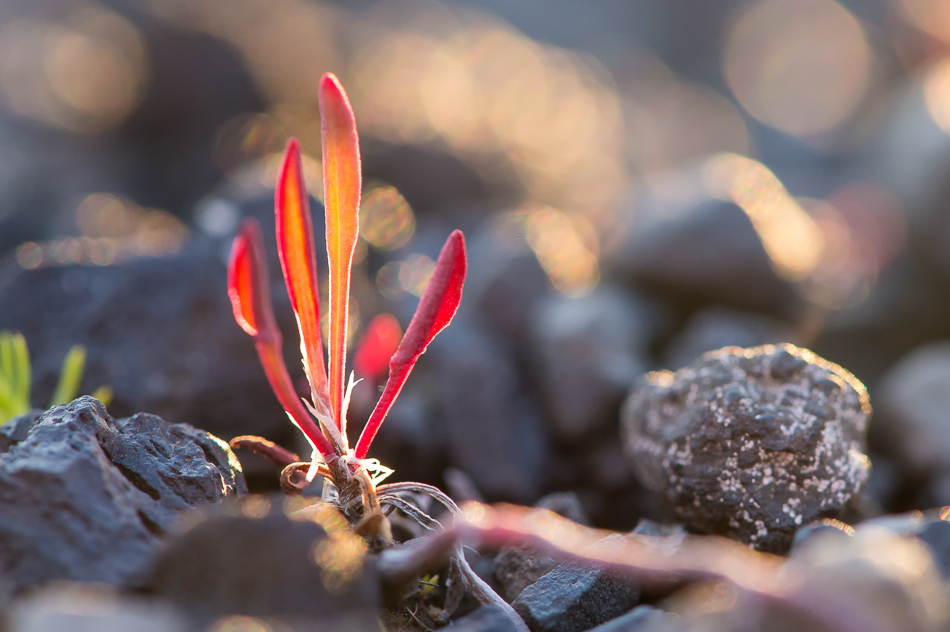 a red plant at sunset
