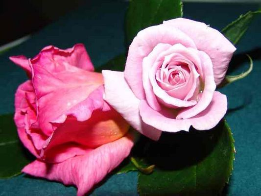 a rose by any other name............