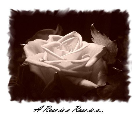 A Rose is a Rose is a...