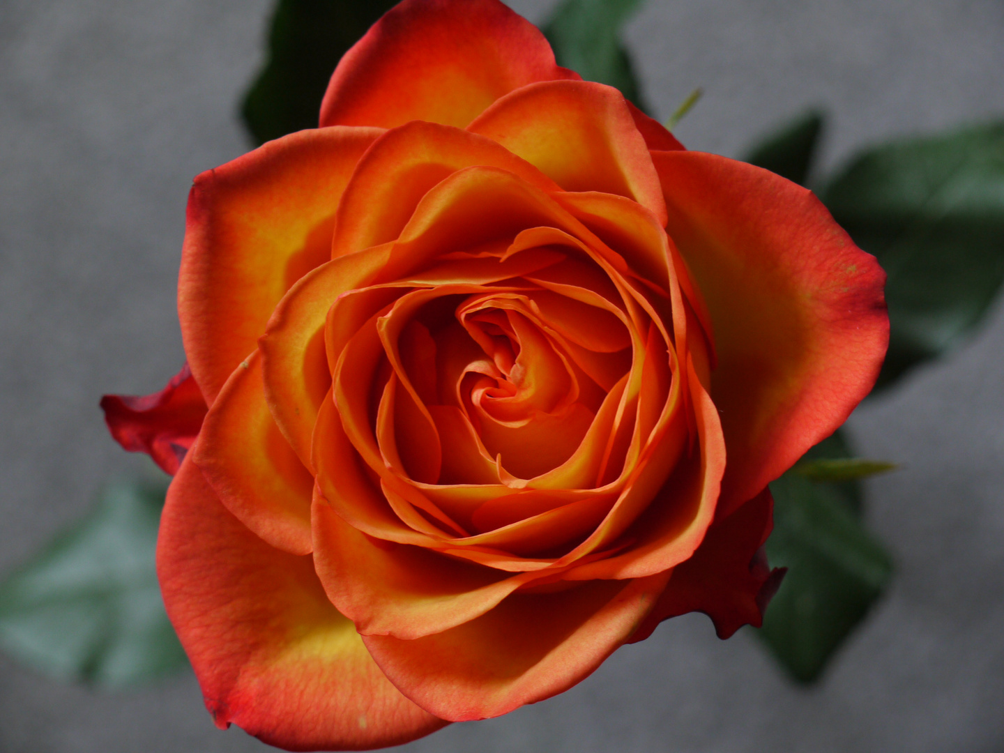 a rose is a rose is a rose ...