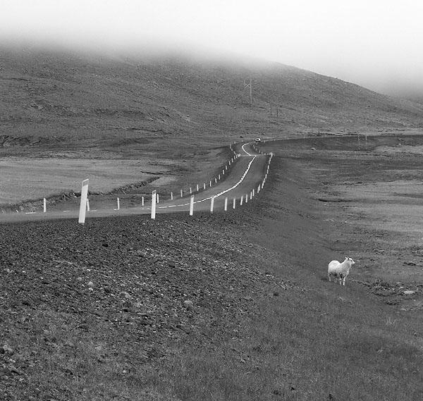 ...a sheep...